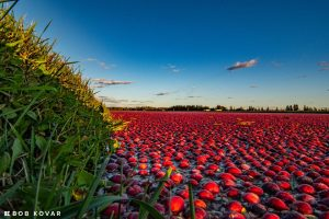FREE Cranberry Marsh Tours @ Cranberry Square Market | Manitowish Waters | Wisconsin | United States