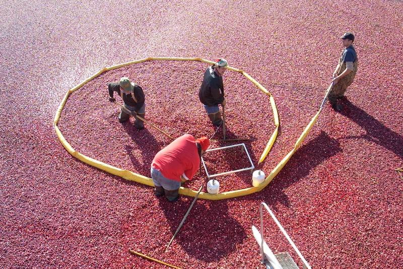 cranberry-harvest-home-box