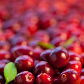 cranberry-bg
